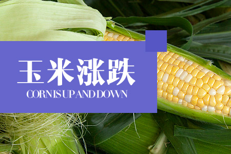 2020年06月05日广西省玉米价格今日行情走势