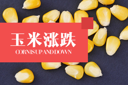 2020年06月08日四川省玉米价格今日行情走势