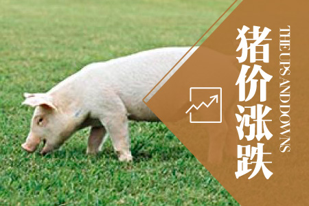 2021年04月13日全国外三元生猪价格行情涨跌表