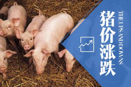2020年08月10日全国内三元生猪价格行情涨跌表