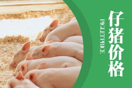 2021年01月28日(15至19公斤)仔猪价格行情走势