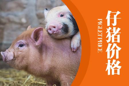 2019年12月14日(20至30公斤)仔猪价格行情走势