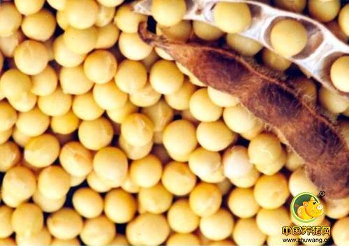 2018年06月16日全国豆粕价格行情走势汇总