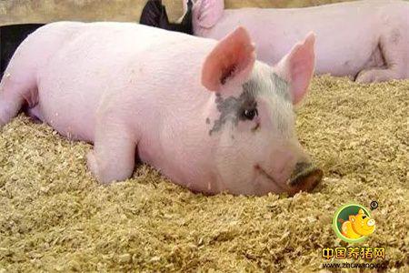 2018年06月17日(10至14公斤)仔猪价格行情走势