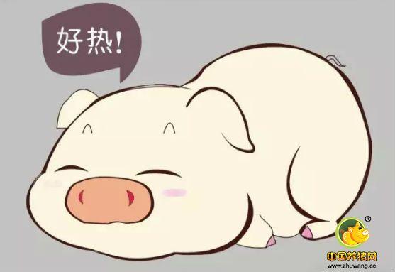 防治有绝招:学会这几点,让你的猪远离应激!