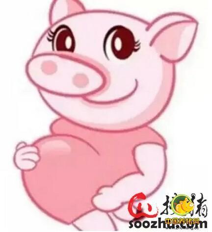夏季给产房母猪降温的十二种方法