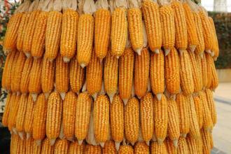 2018年06月17日全国玉米价格行情走势汇总