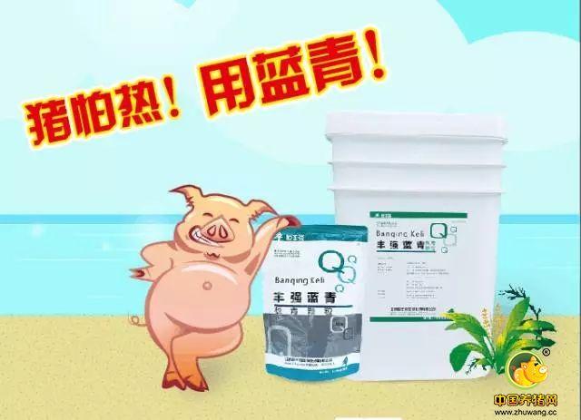 技术 | 猪怕热吗?