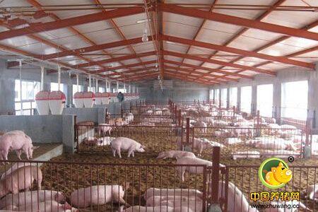 夏秋利用遮阳网养猪的好处,夏秋两季养猪窍门
