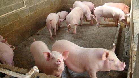 养殖场温控系统功能特点