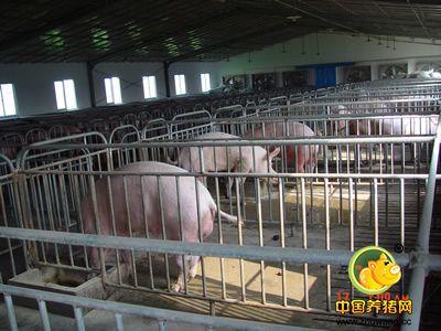 冬季猪场栏舍的管理要点