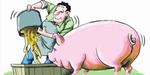 涨还是跌?猪价稳定后将何去何从?