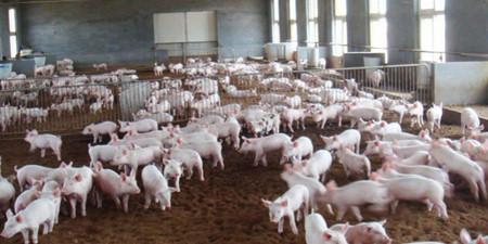 7月猪市仍显疲软 8月能否重回涨势?