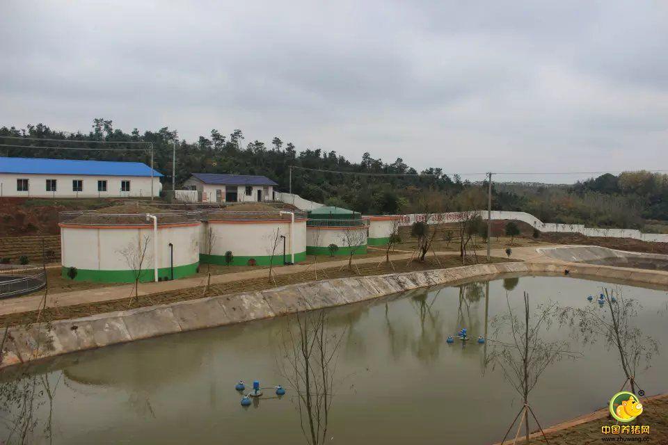临澧天心种业——生态环保型种猪场