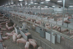 """养猪场开始追求""""零排放"""""""