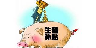 最高80万!今年最新养猪补贴究竟有哪些?