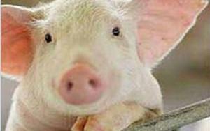 猪场对于产品实效投诉带来的思考?