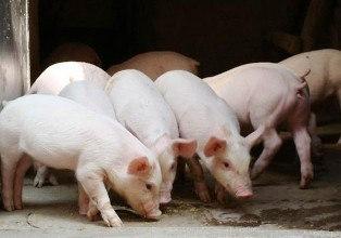 养猪消毒设备-次氯酸发生器