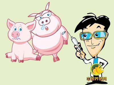 你以为猪场免疫很简单,其实背后的学问大着呢_猪病门诊