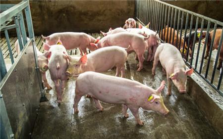 猪场建设之电地暖的优势