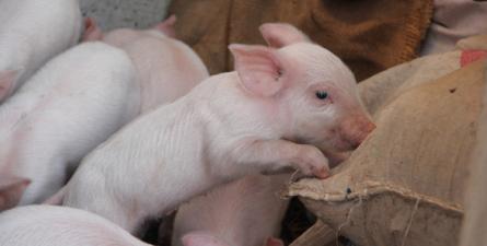 央视财经:涨跌不定!未来四个月猪肉价格怎么走?