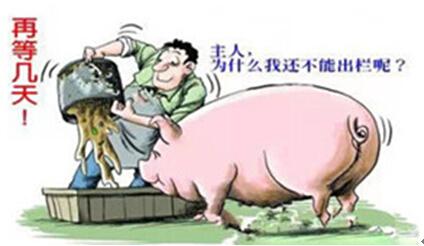 供需不能完全决定行情 猪价将维持在9.3元/斤