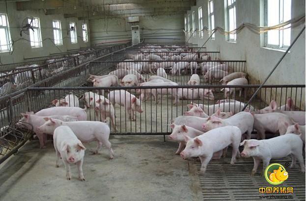 猪舍内保温设备有哪些 红外线灯、吊挂式红外线加热器……