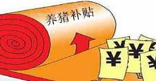 山东胶州:今年生猪良种补贴工作启动 每头补40元