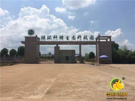 中国最美丽猪场访问记