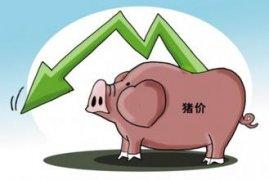 震荡可能性较大 国庆前猪价或将出现恢复性上涨