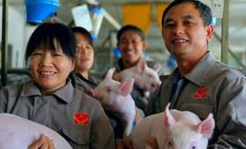 匠人精神 天种能成为国内养猪业第一家百年企业吗?