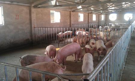 猪粪做有机肥除臭方法