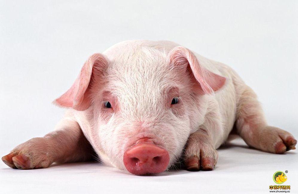 猪流行性腹泻的另类的治疗方法