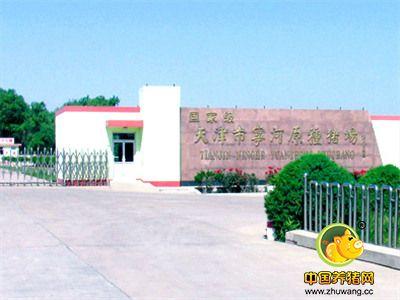 名企推荐——天津市宁河原种猪场
