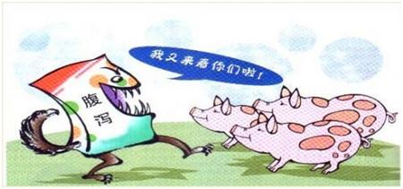 """秋冬季慎防""""猪流行性腹泻 """""""