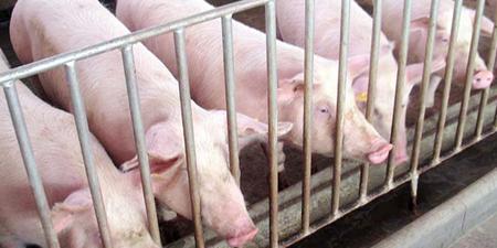 预计国庆节前猪价或维稳 后市跌幅有望趋缓