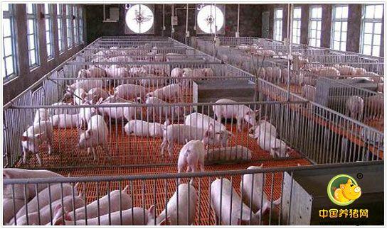 如何在生猪产业改革的年份里扭转乾坤止亏为盈?