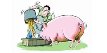 未来究竟有哪些养猪模式还能继续生存和发展下去?