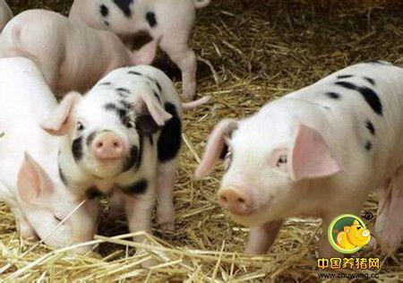 猪场构造存在哪些问题