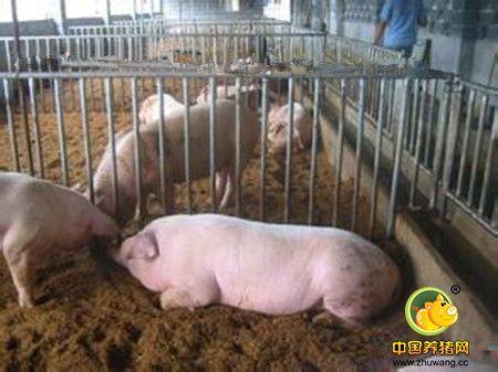 养猪场绿化原因是什么