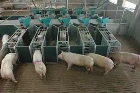 猪场地面建材不同,效果也不同