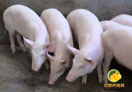 猪舍温度是猪群健康的一个指标