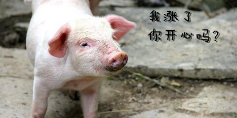 天气渐凉,猪价上涨,敢问路在何方?