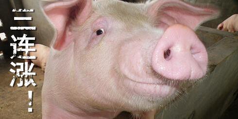 听说猪价从现在开始能上涨至9元/斤,有戏吗?