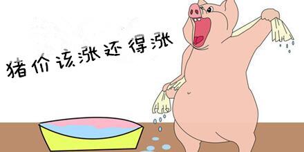 别慌!猪价再回落的可能性已经非常小,该涨还得涨