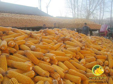 """玉米政策频繁""""出招"""" 玉米价格似有支撑"""