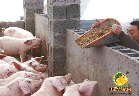 巨头剑指北方 其中1000万生猪养殖项目 年产值将达1000亿!