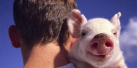 博弈加剧!眼下正是猪价走势的关键时刻