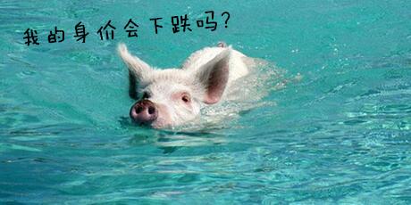 一周综述:猪价上涨遇风险?会再转跌么?