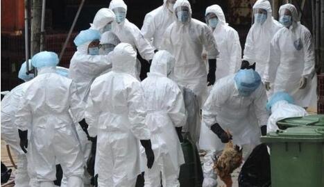 德媒发布消息:欧洲六国暴发禽流感引国际性恐慌!